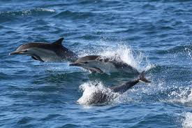 Would the dolphins be my friends?